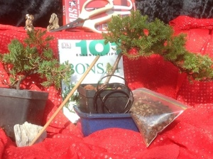 Gift Ideas Plant City Bonsai